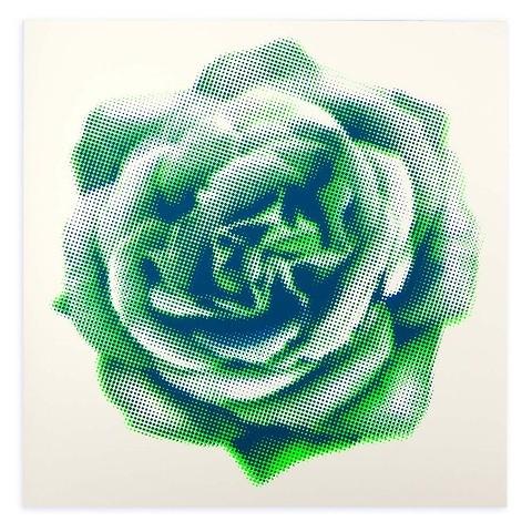 Grußkarte Rose gerastert grün quadratisch